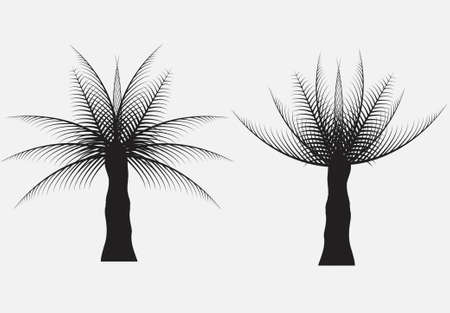 fronds: silhouettes of the coconut trees