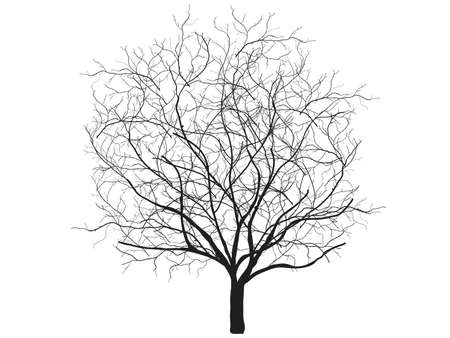 oak wood: Dead tree silhouette. Vector old dry oak crown without leafs isolated on white