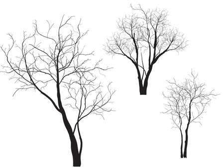 Dead Tree without Leaves Vector Illustration , EPS 10. Ilustracja