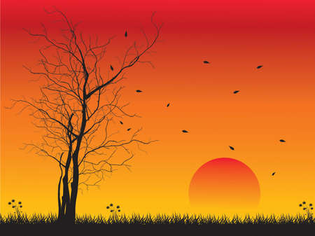 backlit: Alone tree with sun and color red orange yellow sky