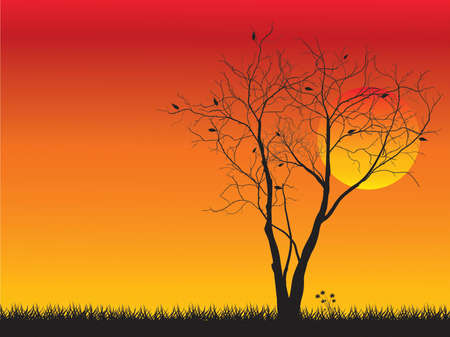 yellow sky: Alone tree with sun and color red orange yellow sky