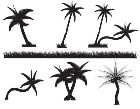 cutout: Set tropical palm trees with leaves, mature and young plants, black silhouettes isolated on white background. Vector