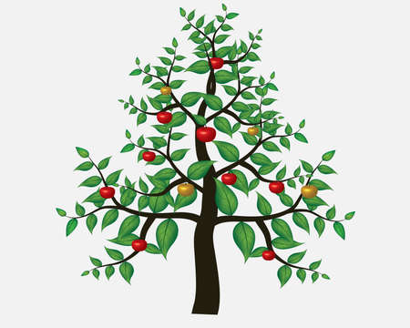 red apples: Green Apple tree full of red apples isolated over white