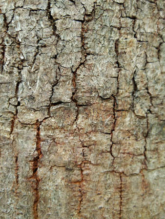 Tree bark texture background. Stock Photo