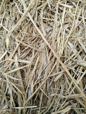 Background of dry straw Stock Photo