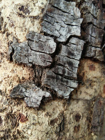 tree bark background, bark macro,  tree texture, bark texture