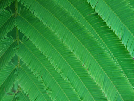Pattern of green leaf