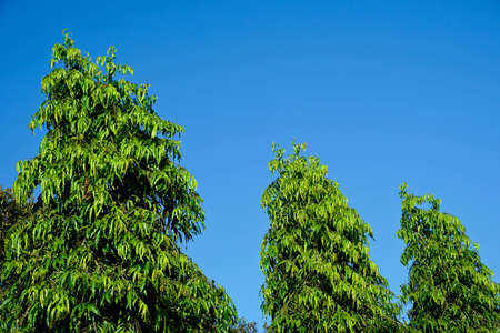 photgraphy: Branch leaves against the blue sky