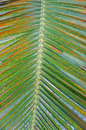 photgraphy: Lines and textures of green palm leaf Stock Photo