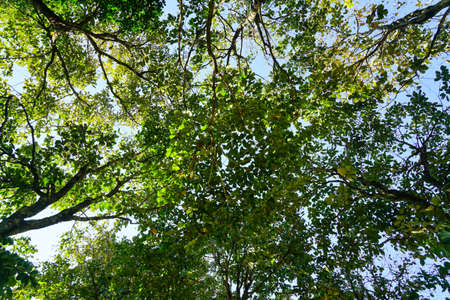photgraphy: View from under a tree.