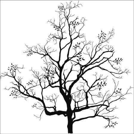Dead tree silhouette vector