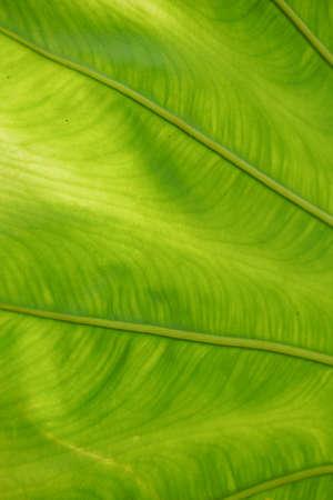 Green leaves background with lighting. Zdjęcie Seryjne
