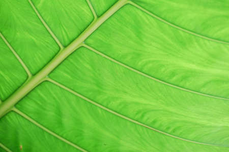 Green leaves background with lighting. Stockfoto
