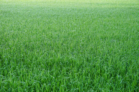 Background of a green grass Stockfoto - 103582236
