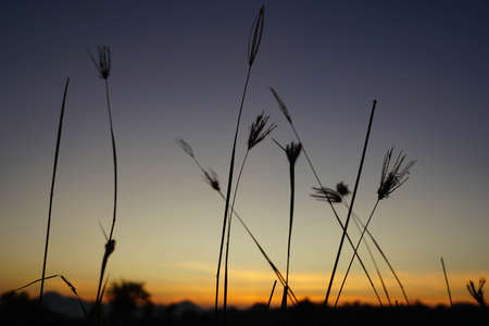 grass on the background of the setting sun