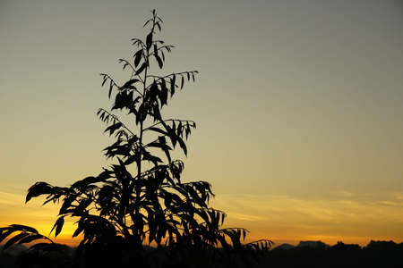 Tree on the background of the setting sun Stockfoto