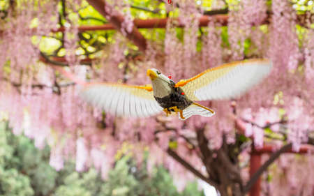 A bird toy flying on the background of pink wisteria trellis photo