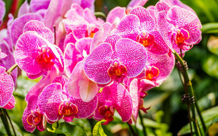 orchids in garden on nature background photo