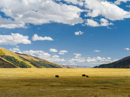 Beautiful landscape of Longdeng prairie in Sichuan, China. Banque d'images