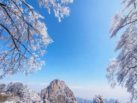 Scène de neige sur le mont Huangshan et branches d'arbres sous la neige. Le parc national de Huangshan est le plus célèbre et le plus beau site touristique de Chine. Banque d'images - 76069996