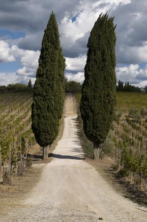 Tuscany Stock Photo - 13074048