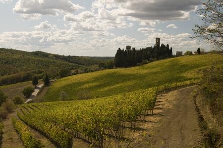 A vineyard in Tuscany, Italy photo