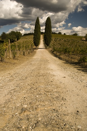 An empty rural road in Tuscany, Italy photo