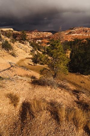 A beatiful Bryce Canyon in Utah, USA Stock Photo - 13267196