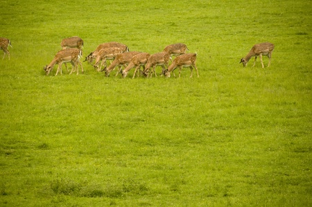 Agroup of deers close up photo