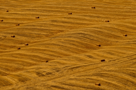 Field with gold hay photo