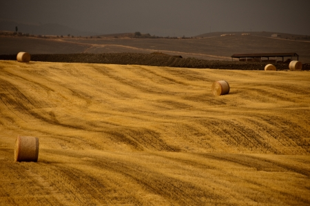 Gold hay field in countryside photo
