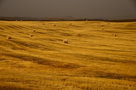Field of gold hay in tuscany, Italy photo