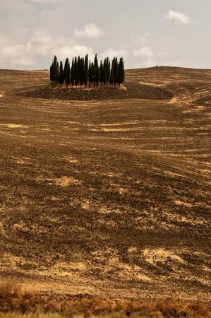 Cypress trees in Tuscany,Italy Stock Photo - 17096361