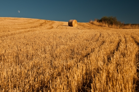 Farmland photo