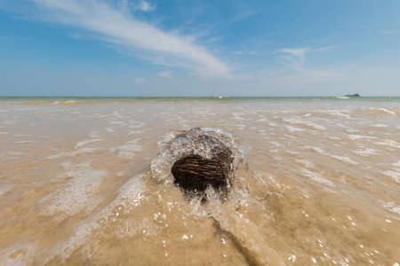 handlers: dried and empty coconuts on a beach