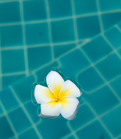 frangipani photo