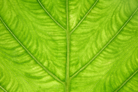 leaf texture,background photo