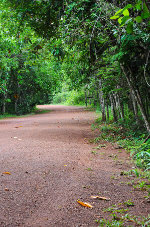 clay stone road in jungle: beautiful country road that runs along a forest in the mountains