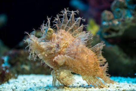 reef fish: reef fish in  aquarium