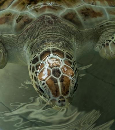 el sheikh: Close up crop of Sea Turtles Stock Photo