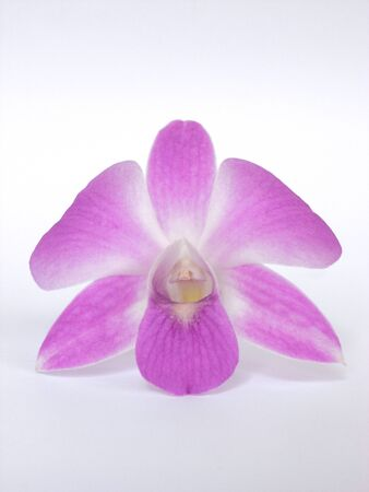 orchid flower: orchid flower