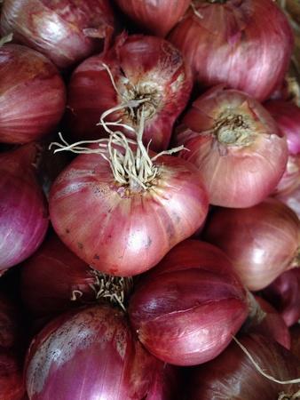 cebolla roja: De cebolla roja Foto de archivo