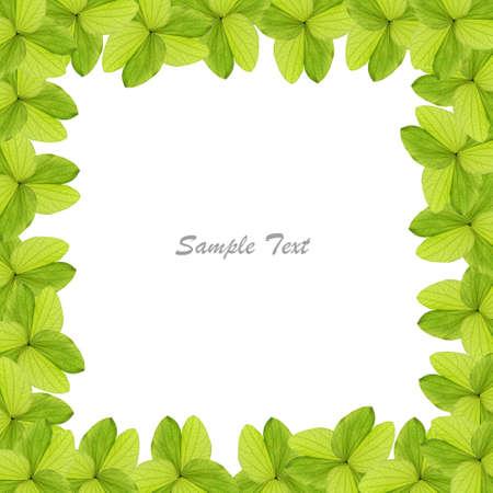 green leaves: Green leaves border Stock Photo