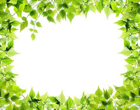 green leaves: Natural leaves border on white background