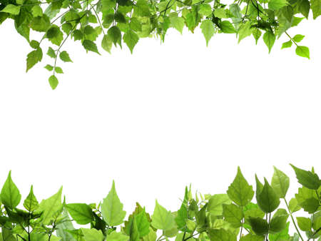 Natural leaves top and bottome border Stock Photo - 12974908