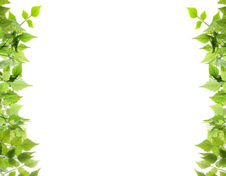 Natural de las hojas de borde lateral Foto de archivo
