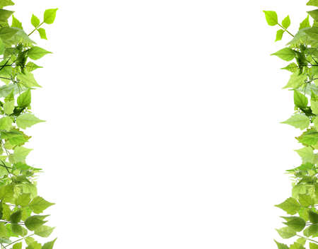 Natural leaves side border Stock Photo
