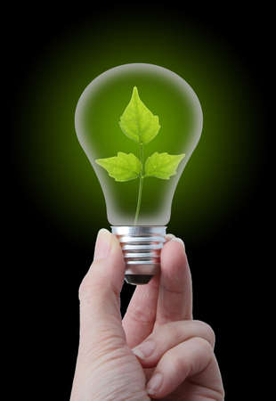 Natural energy concept  Lightbulb with leaves
