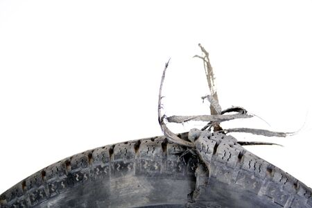 inconvenience: A blown-up car tire, wires and inner layers exposed. Stock Photo