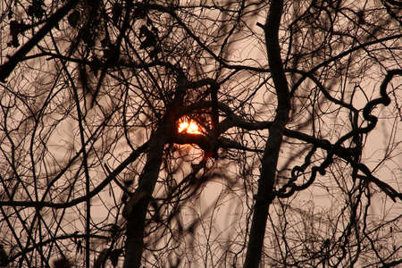 parting: Sunset Sun disc through twisted dry branches. Good for Meditation and Concentration. Dry season in Lao.